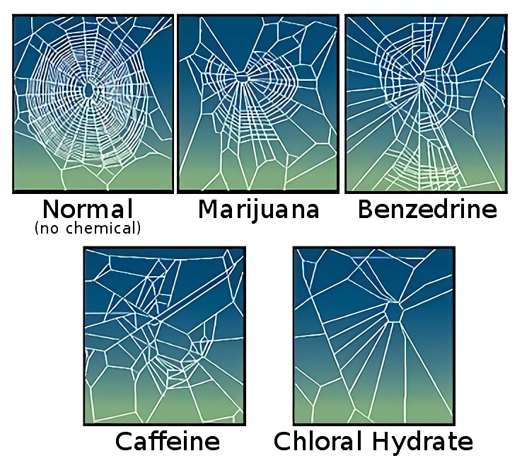 Netzbauverhalten von Webspinnen unter Einfluss verschiedener Substanzen. Bild: pd