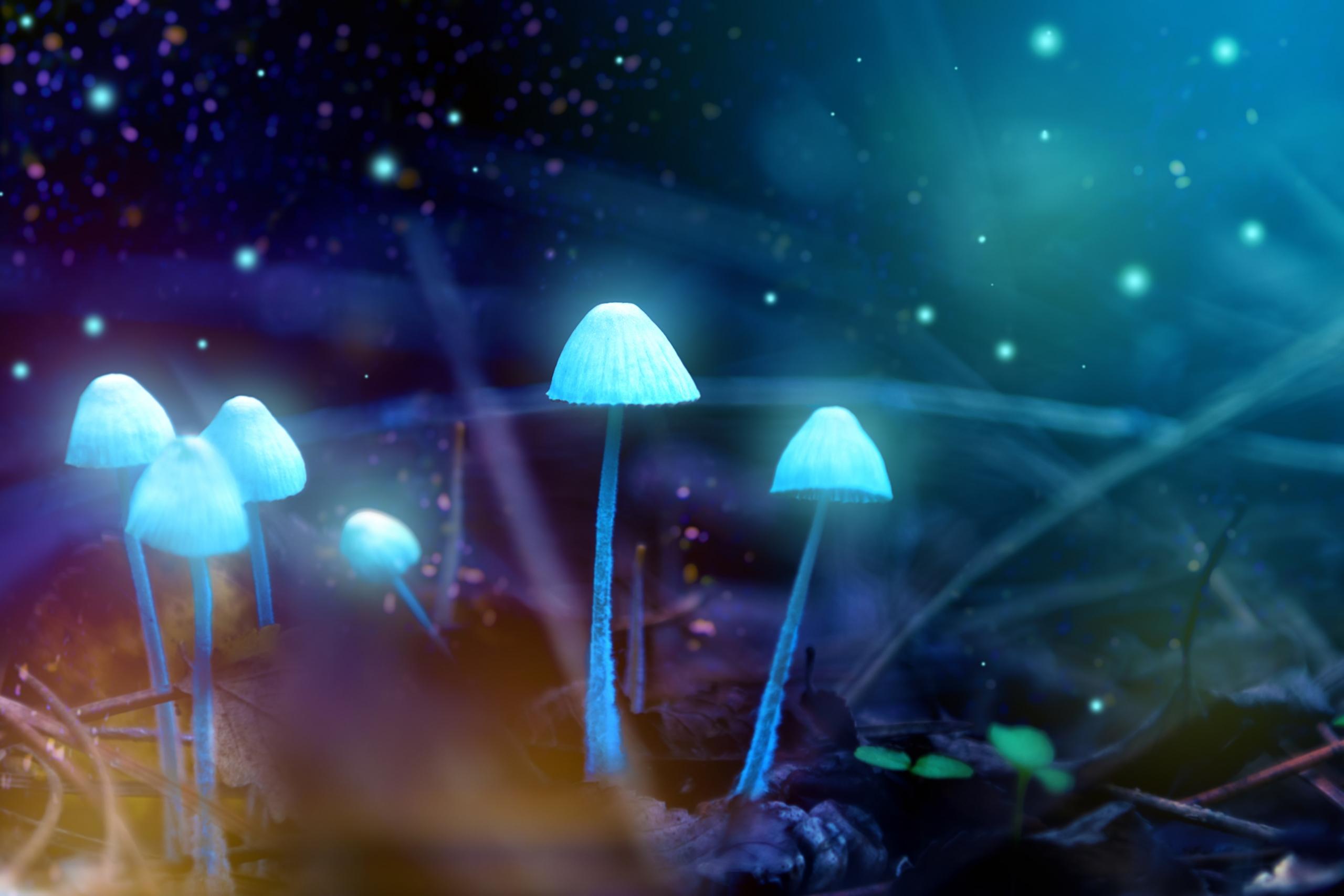 Zauberpilze: Mehr als nur Psilocybin?